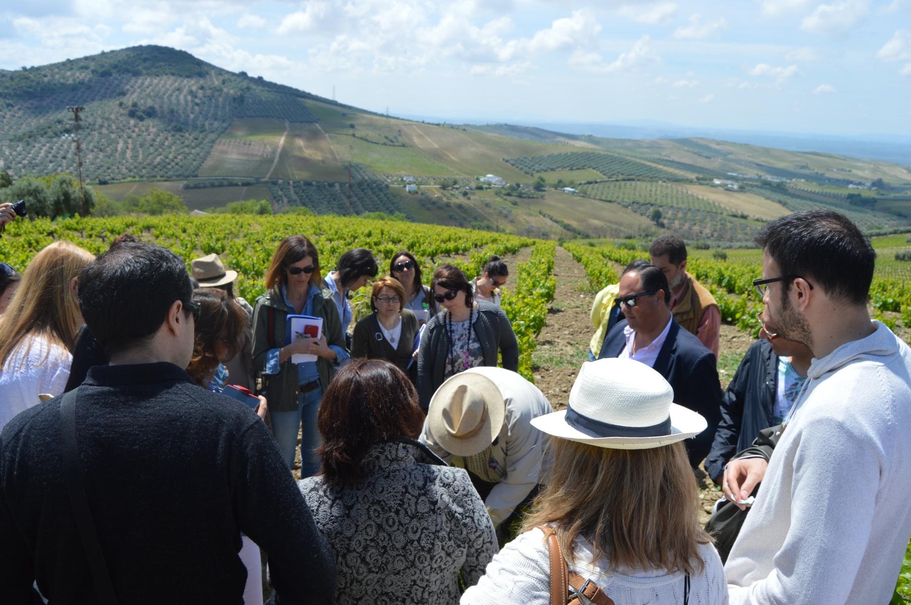 Grupo visita lagar blanco Sierra de Montilla